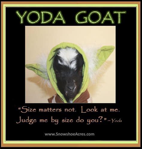 yoda goat cute colorful comical goats pinterest