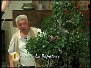 Comment Tailler Un Ficus : comment traiter un ficus ginseng la r ponse est sur ~ Melissatoandfro.com Idées de Décoration