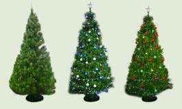 where to buy a real christmas tree in perth perth