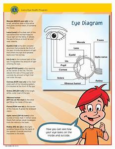 Diagram Of The Eye For Kids