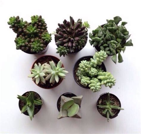 potted-plant-aesthetic | Tumblr