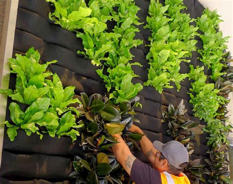 Plants Used In Vertical Gardens by Plants On Walls Vertical Gardens Living Wall Systems