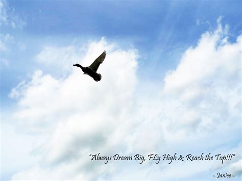 Quotes About Flying High. Quotesgram