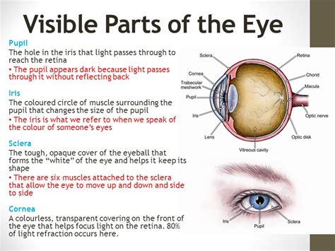 what is the colored part of the eye called section 12 1 part 1 the human eye ppt