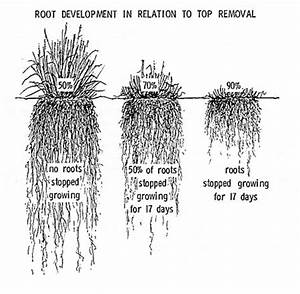 Labelled diagram of a plant root image collections how to guide and labelled diagram of a plant root image collections how ccuart Choice Image