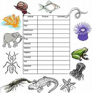 Taxonomy  Phylum
