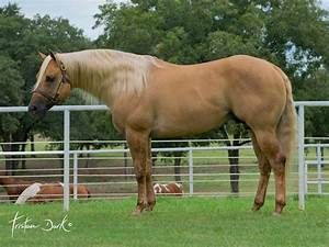 213 best images about Horses on Pinterest | Palomino, Life ...