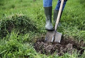 Comment Planter Un Camélia : planter un arbre comme par magie x 9 tapes d tente jardin ~ Melissatoandfro.com Idées de Décoration