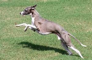 Five Skinny Dog Breeds   LOVE