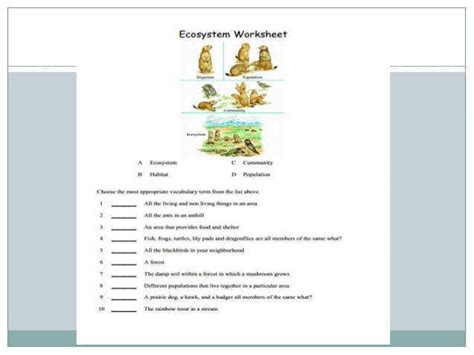 Ecosystem Worksheets Homeschooldressagecom