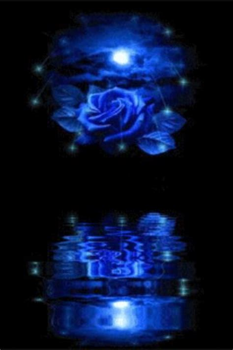 Blue Rose Reflected In Water L   Android Apps on Google Play