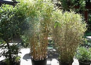 Bambus Im Winter : bambus im pflanzk bel ~ Frokenaadalensverden.com Haus und Dekorationen