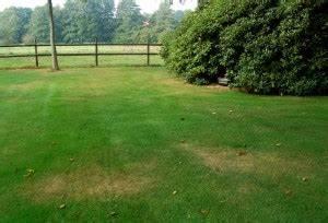 Braune Stellen Im Rasen : wir sind im garten ~ Lizthompson.info Haus und Dekorationen