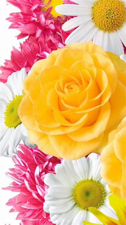 Iphone Flowers Yellow Wallpapers Flower Apple Backgrounds