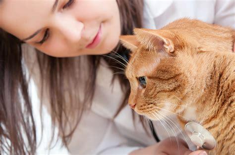 Chest Bone Deformity In Cats