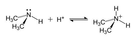 Protonated Amine by Dimethylammonium Formation 2d