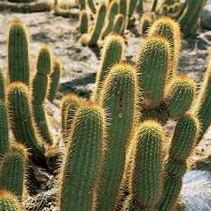 10 Facts about Desert Plants | Fact File