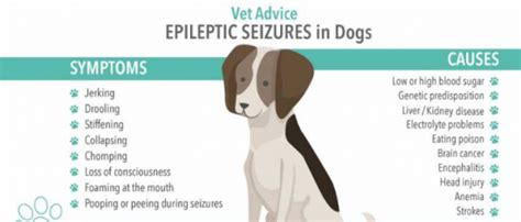 Epilepsy In Dogs, Causes, Types, Symptoms, Diagnosis