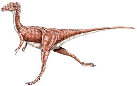 Compsognathidae Dinosaur