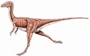 Compsognathus longipes - Compsognathidae dinosaur