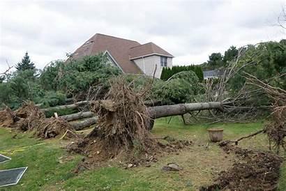 Tornado Trees Damage Aftermath Providencejournal