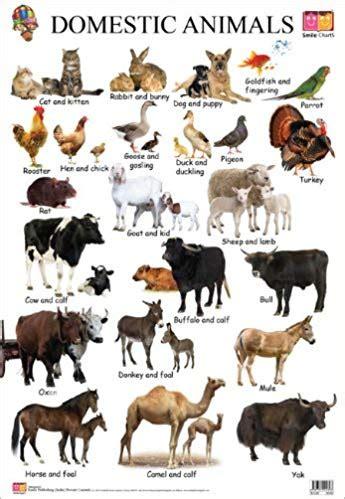 variety wild animal  blog wild  domestic animals