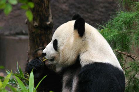 Endangered Animals Wallpapers - world wildlife fund images endangered animals wallpaper