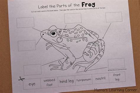 frog life cycle worksheets mamas learning corner