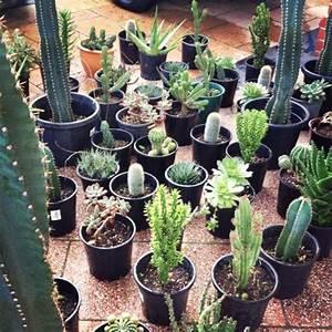 cactus & pot | my green thumb | Pinterest