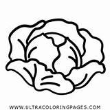 Lettuce Coloring Gambar Sayur Colorear Dibujo Mewarnai Lechuga Putih Hitam Drawing Sayuran Capitata Flower Romana Imagen Libro Grupo Kartun Selada sketch template