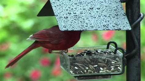 backyard bird shop locations sidedish feeder birds unlimited birds