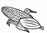 Corn Coloring Cob Getdrawings sketch template