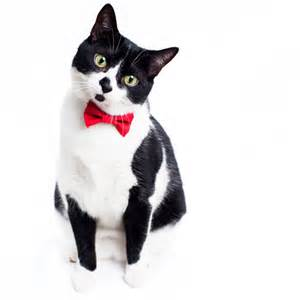 cat tie v day giveaway 1 sweet pickles collar and bow tie i