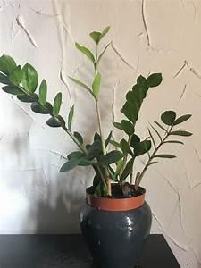 Zimmerpflanzen Die Wenig Wasser Brauchen : zimmerpflanzen bei wenig licht diese 5 wachsen im schatten ~ Frokenaadalensverden.com Haus und Dekorationen