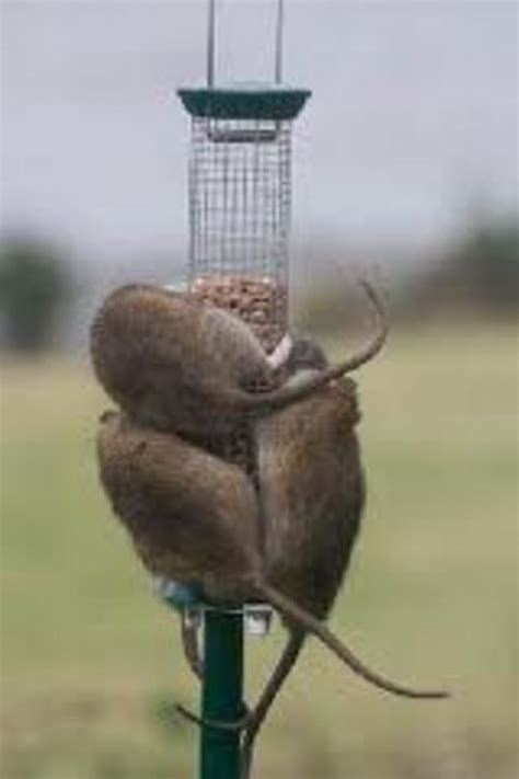my neighbor doesn t like me feeding the birds