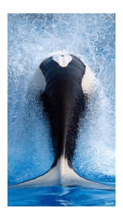 Whale Dreamies Gemerkt Von Im Tiere