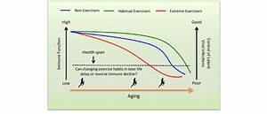 Proposed Relationship Between Exercise Habits And Immune