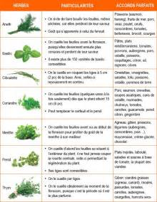 Herbes Aromatiques Pour Cuisine by Les 25 Meilleures Id 233 Es Concernant Herbes Aromatiques Sur