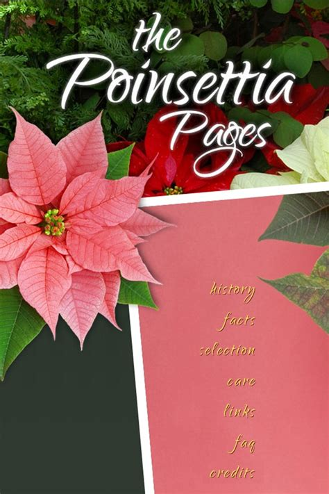 poinsetta care 179 best images about plants poinsettia on pinterest the plant after christmas and the christmas