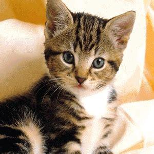 gif animationen die besten gifs katzen katzen