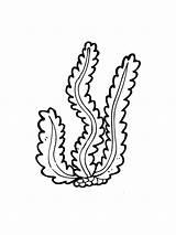 Seaweed Coloring Printable sketch template