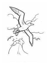 Coloring Pages Albatross Birds sketch template