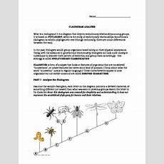 Cladogram Analysis Lab By Jamie Moderhack  Teachers Pay Teachers
