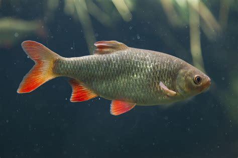 small decorative pond fish shelly lighting
