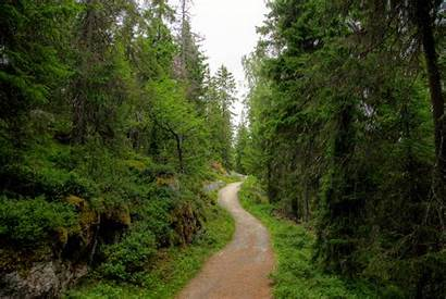 Forest Trail Finland