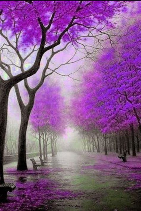 nature inspired wallpapers purple trees scenery smartphones fall xcitefun pretty autumn lavender leaves colour colorful cool path violet