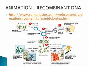 Recombinant Dna And Polymerase Chain Reaction