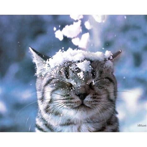 Aaaah Snooow!   Meow Moe