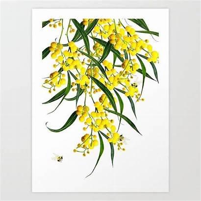 Wattle Golden Vol Society6 Prints Australian Flowers