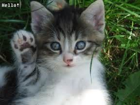 cat friends hawaii kittens pictures stories